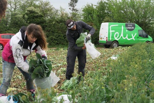 felix volunteers gleaning in kent