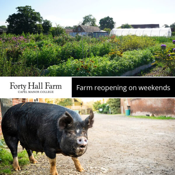 forty hall farm reopening at weekends