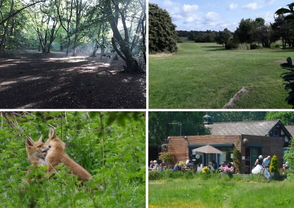 photographs of whitewebbs park