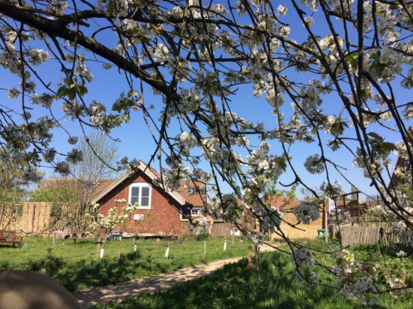 forty hall farm orchard blossom 2017