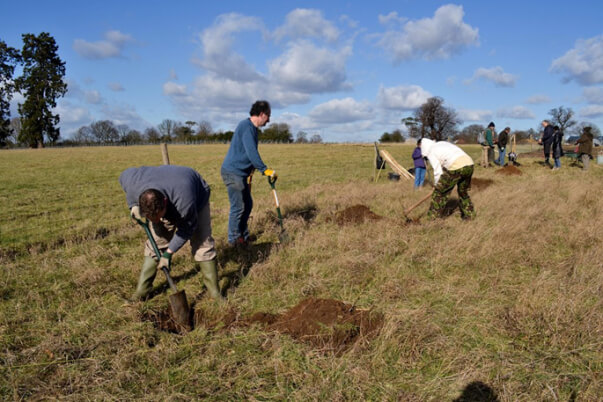 forty hall farm orchard digging holes for the first trees 2012