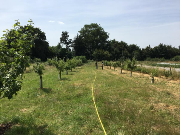 forty hall farm orchard in june 2018