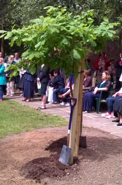 minchenden oak rededication new sapling