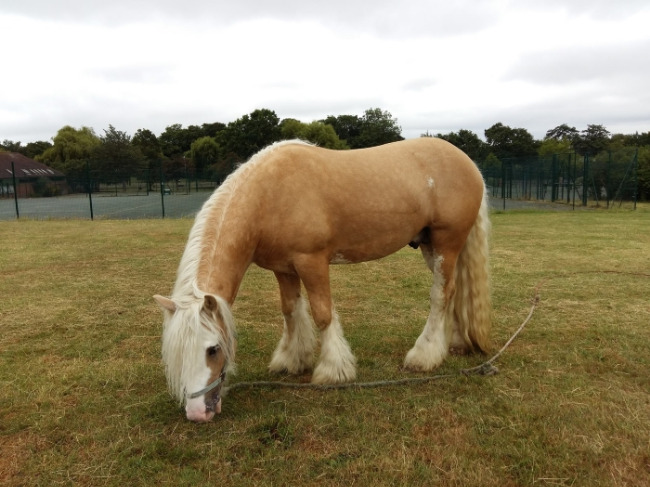 horseinbroomfieldparkjuly2017-davidmarch.jpg
